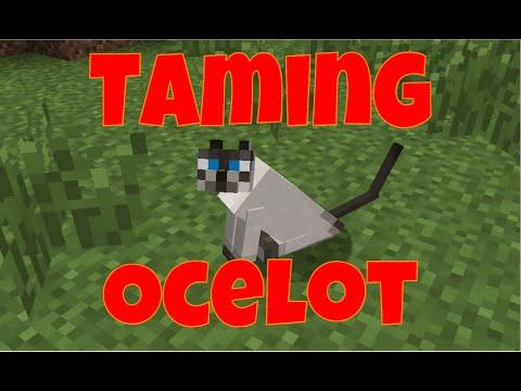 Taming An Ocelot (Minecraft)