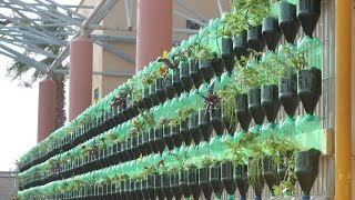 The Green Wall Educational Vertical Garden Bottle System Project