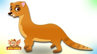 Animal Songs for Kids | Mongoose Song