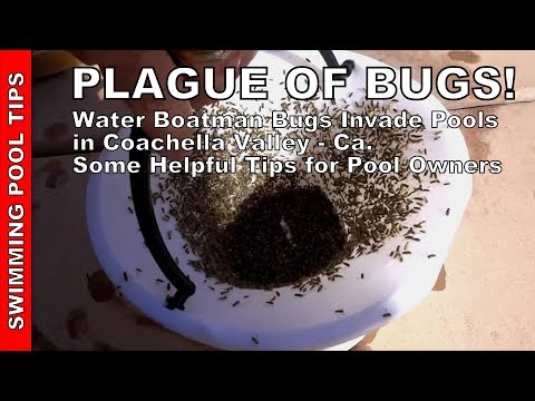 PLAGUE OF BUGS! Water Boatman Bugs Invade Pools & Lakes in the Coachella Valley - Helpful Tips