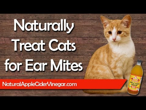 How to Naturally Treat Ear Mites in Cats