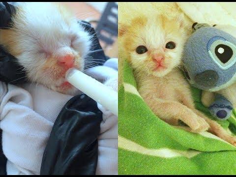 ✰ RESCUED NEWBORN Kitten Story✰!! *EMOTIONAL*