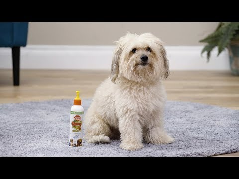 Synergy Labs Fooey Ultra-Bitter Spray and Gel for Pets