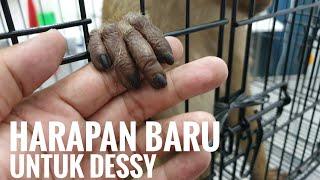 RESCUE : Dessy, Beruk Terbengkalai Nan Ramah