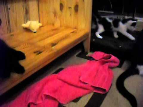 my cat and her 5 week old babies just started walking.