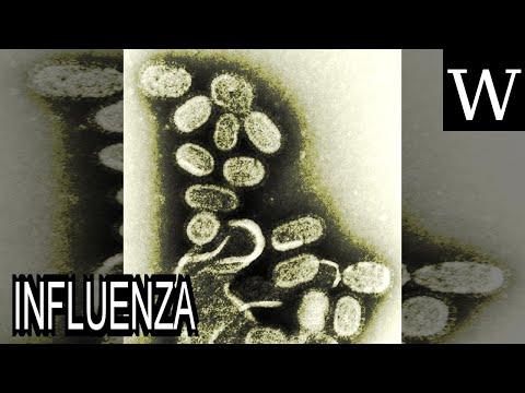 INFLUENZA - WikiVidi Documentary