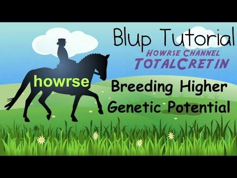 Breeding Higher Genetic Potential - Howrse Blup Tutorial