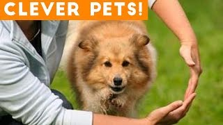 Ultimate Smart Animal Trick Compilation | Funny Pet Videos!