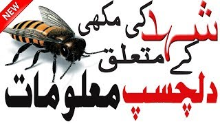 Honey Bees Facts   Interesting About Bees   Facts About Honey Bee   Honey Bee facts   Hidden Secrets