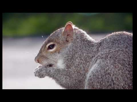 Exotic Pets : How to Adopt a Squirrel