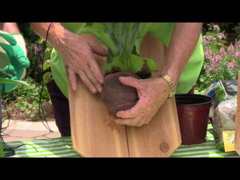 How to Plant Staghorn Fern on a Board