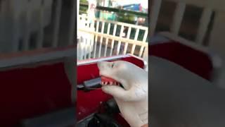 SHARK PUPPET ON ROLLERCOASTER!
