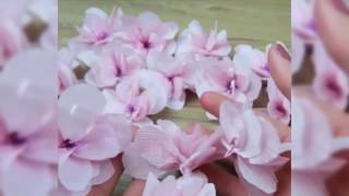 Download Cherry Blossom Video