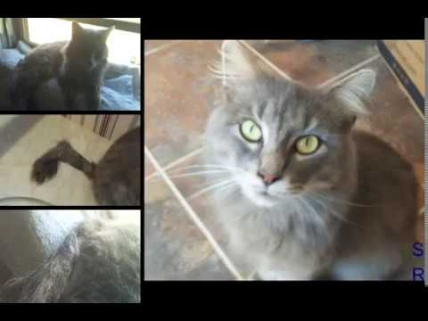 Healing Chronic Diarrhea & Rectal Prolapse in Cat with Natural Remedies in 4 days!