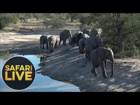 safariLIVE - Sunset Safari - June, 06. 2018