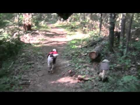 Paying the Piper - (7 of 11) Eight Day Solo Canoe Trip with my Dog