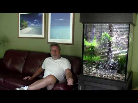 Mike's 75-gallon Angelfish Display
