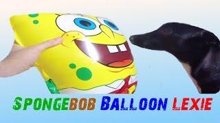 SpongeBob Balloon * Lexie