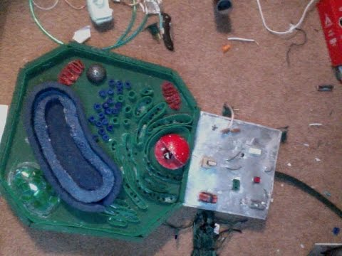 How to make a plant cell model