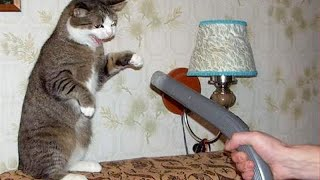 ANIMALS and VACUUM CLEANERS - BEST FRIENDS or the WORST ENEMIES