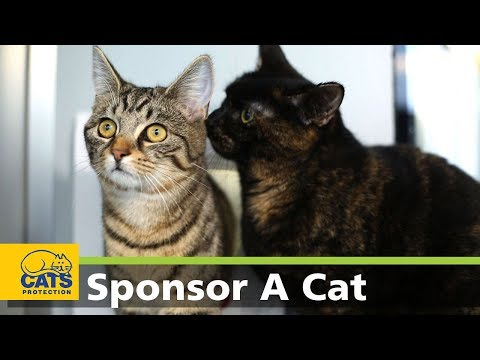 Marina & Marcia - Meet the Cats Protection Sponsor Cats series 2, episode 4