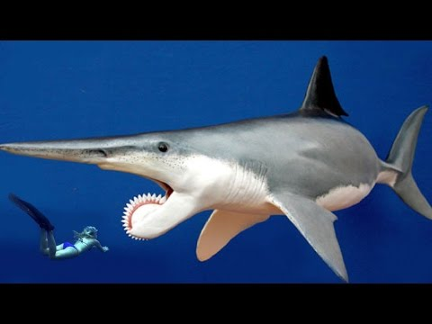 WORLD'S MOST BIZARRE SHARK - Real or Fake?