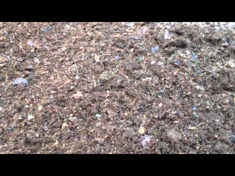 Composting Leaves The Quick Way With Minimal Effort