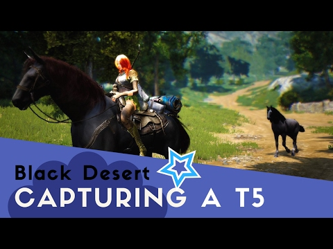 Black Desert Online - Catching a Tier 5 horse