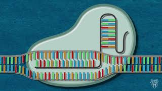 CRISPR Explained