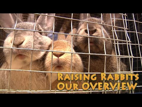 Raising Rabbits OVERVIEW - rabbits for food production