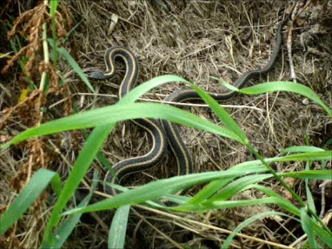 Snakes on a Compost