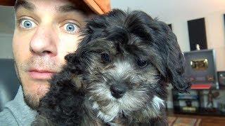 WE GOT A PUPPY!