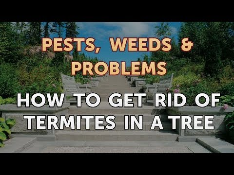 How to Get Rid of Termites in a Tree