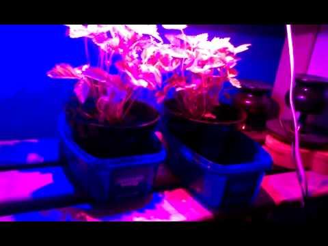 Homemade LED growlight