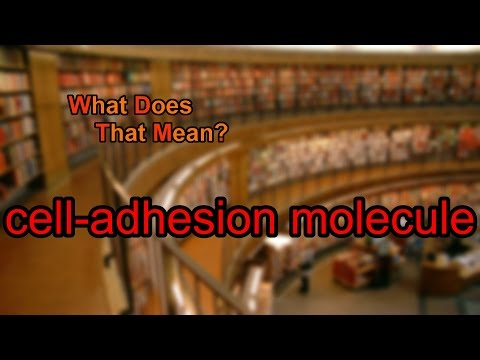 What does cell-adhesion molecule mean?