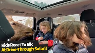 Kids have adorable reaction to feeding elk at drive-through safari