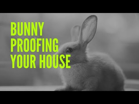 Bunny Proofing Your House