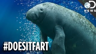 Can You Guess Which Animals Fart (Or Don