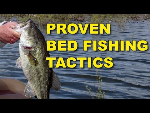 Proven Bed Fishing Tactics for Spawning Bass | Bass Fishing