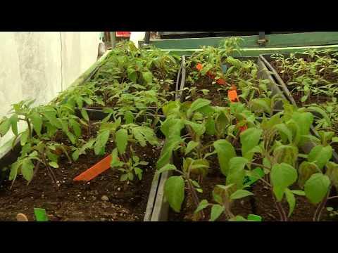Nanoose Food Box - The Community Producers