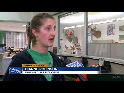 Wisconsin DNR asks for hunters' help in fighting deer disease