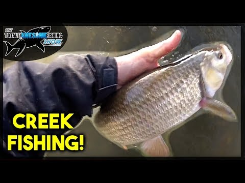 Creek Fishing with Waders - A Solo Fishing Trip