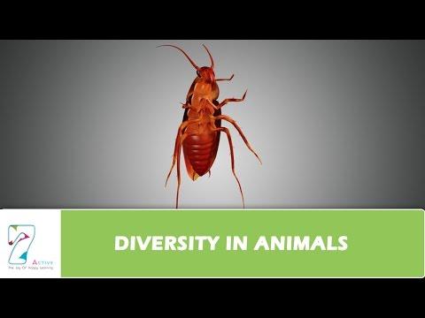 DIVERSITY IN ANIMALS
