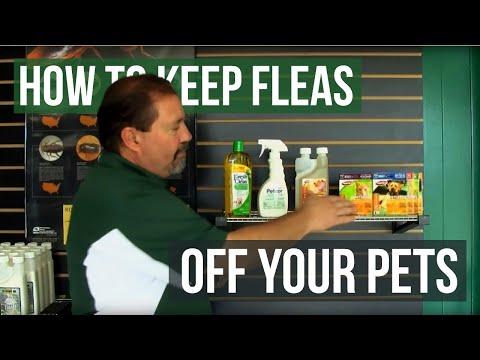 How to Keep Fleas off Pets