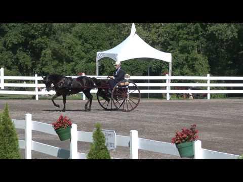 8-10-2011  Gent/Single Horse Meadowbrook/Road Cart - Reinsmanship