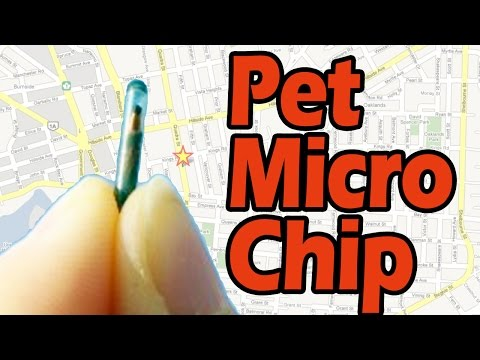 GPS Microchip for pets- Pet Hospital Murrieta