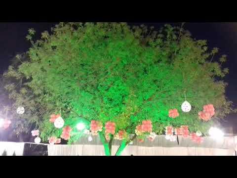 Balloon decoration on tree at weddings garden and birthday party garden