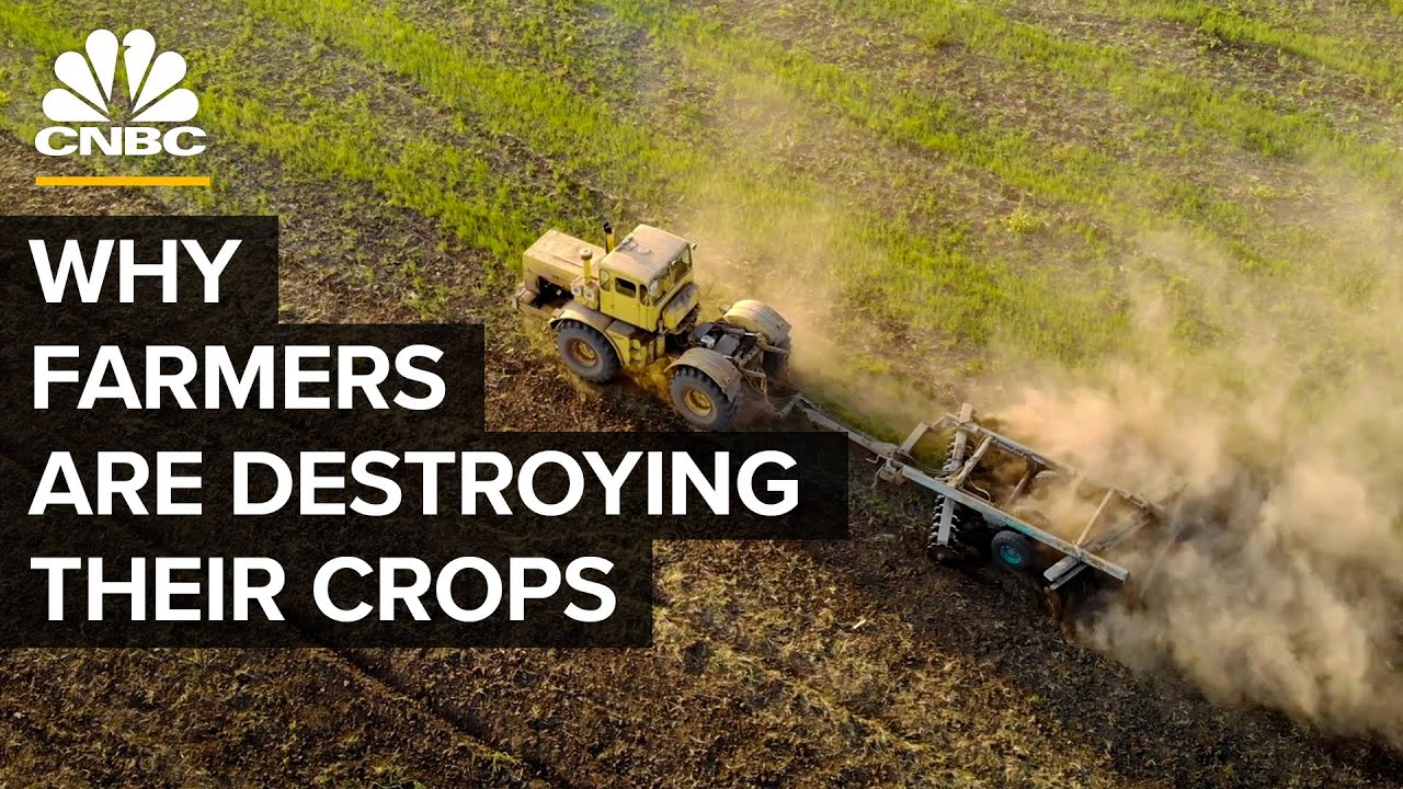 Why Farmers Are Destroying Millions Of Pounds Of Food