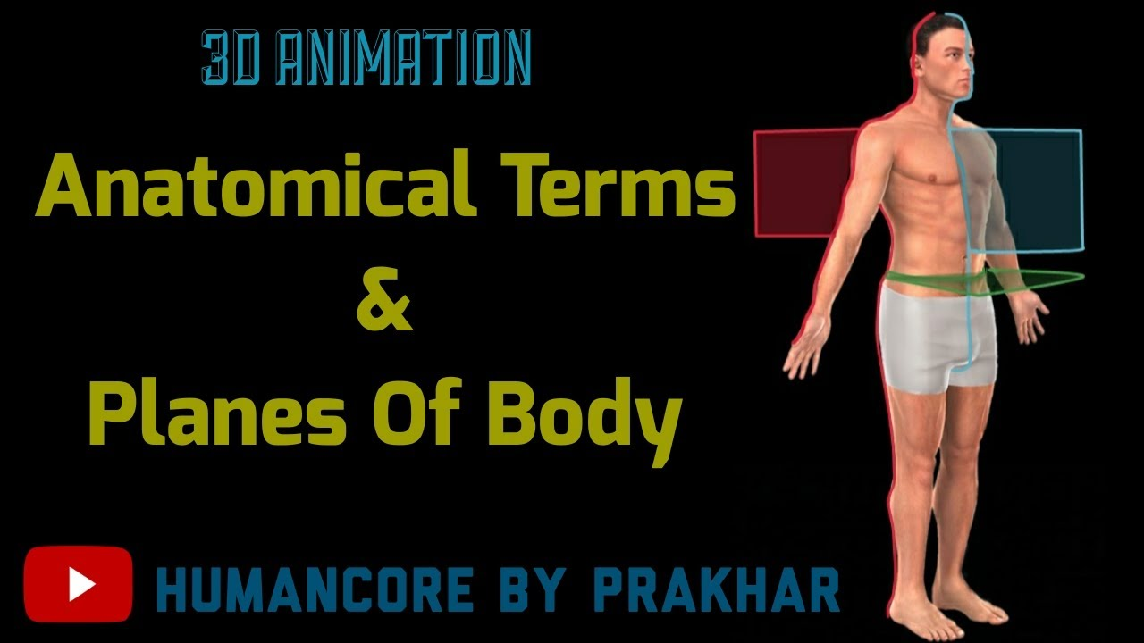 Anatomical Position And Directional Terms In Hindi   Anatomical Planes   Anatomy - 3D