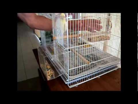 Tidy Seed No-Mess Bird Feeder Full Demonstration